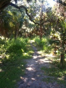 The footpath at Red Bug Slough Preserve